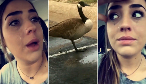 WATCH: 'I just spent half an hour crying over a one-legged goose   and then  this happened'