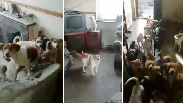 VIDEO: Man living with 70 dogs asks for help from animal shelter