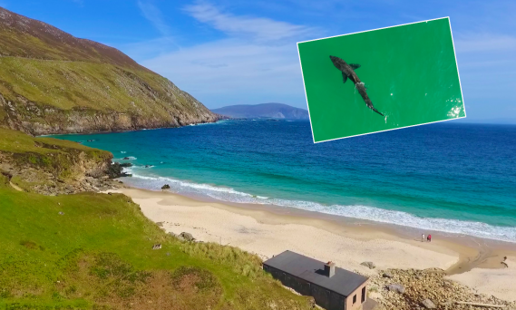 WATCH: 25-foot shark swimming